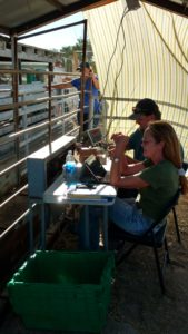 Amy & John helping with livestock weigh-in at fair.