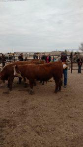 Lincoln/Otero Livestock Judging Contest