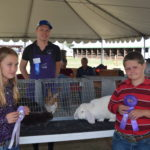 Picture of Rabbit Champion & Reserve Fair 2017