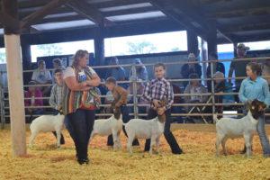 Goat Show
