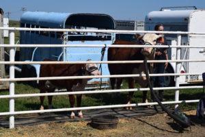 Beef Show