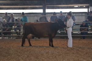Dairy Show