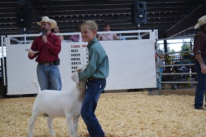 picture of goat 2 at sale