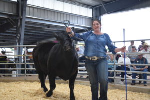 picture of steer 2 at sale