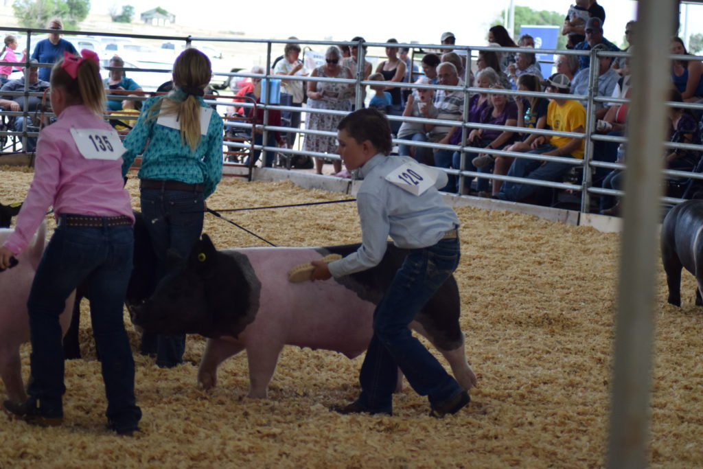 pic 4 pigs